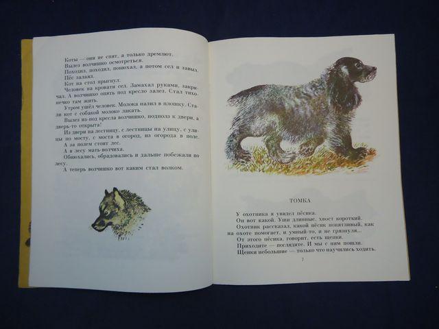Рисунки из рассказа волчишко чарушина 18