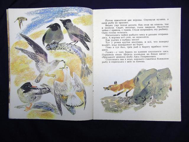 рисунок медведь рыбак чарушин